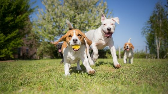 Benefits of Adding a Dog Park to Your Apartment Complex